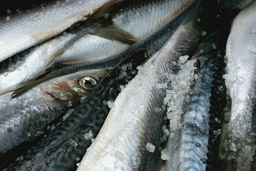 Kalanädala puhul: miks me peame sööma kala ja kust see võiks pärit olla?