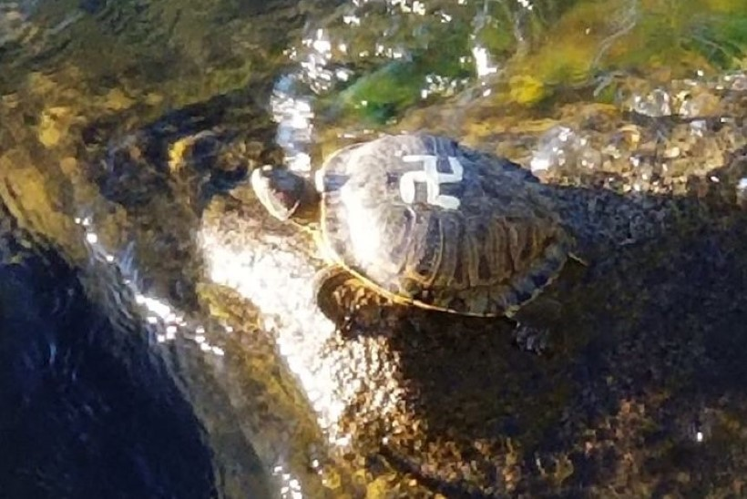 NÕME TEGU: vandaalitsejad maalisid kilpkonnade kilbile haakriste