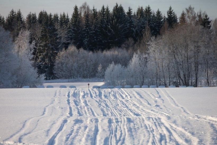 ILMATARGAD ENNUSTAVAD: kas jõulud tulevad paksu lumega või porimülkas?