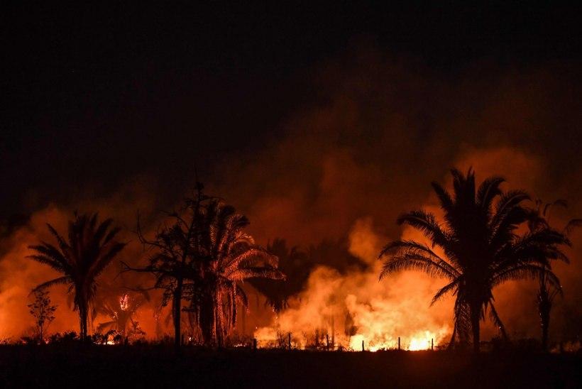 Brasiilia president süüdistab metsatulekahjudes Leonardo DiCapriot
