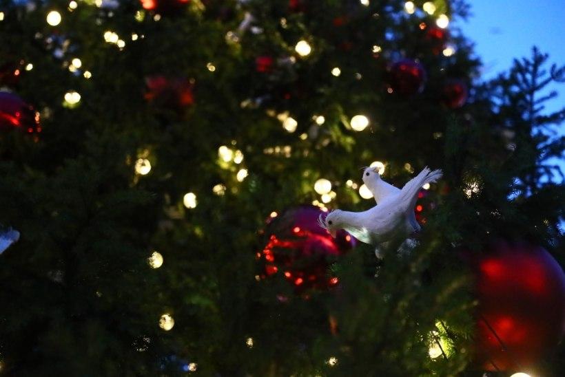 GALERII | Esmakordselt avati Noblessneri jõulukuusk