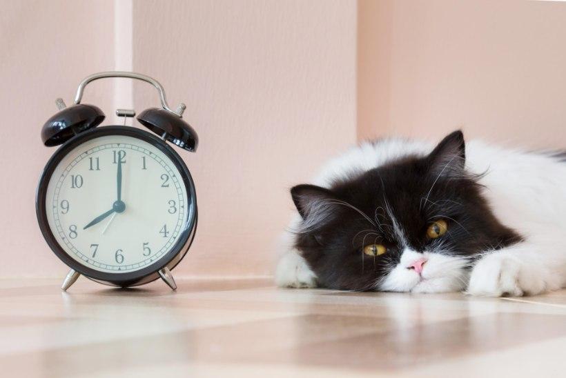 ÜKS KÜSIMUS | Kui palju aega neelavad pensionireformi 949 muudatust?