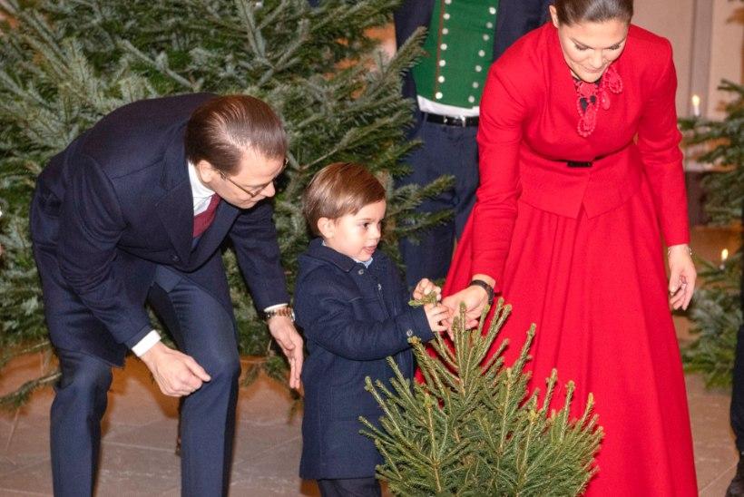 VIDEO | Rootsi prints Oscar käis jõulukuuske valimas!