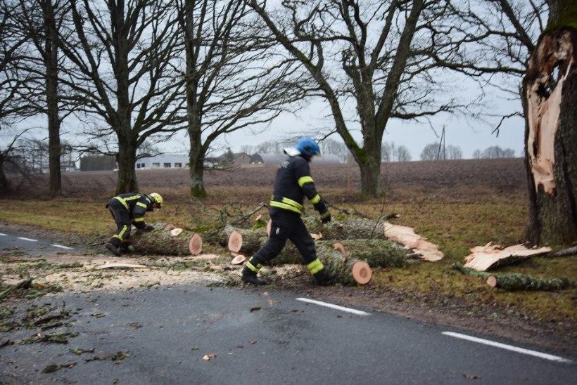 FOTOD ja BLOGI | Detsembritorm liikus üle Eesti: kaks last jäid murdunud puu alla, hommikul on vooluta ligi 18 500 majapidamist