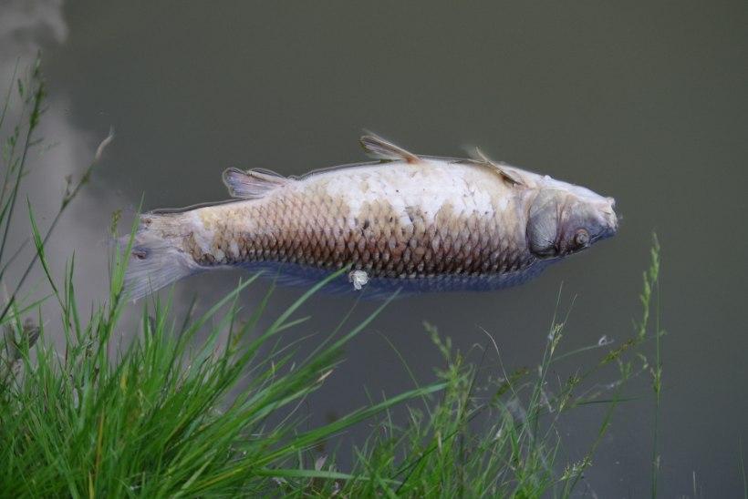 Veefirma maksis kalameestele torulekke eest kompensatsiooni