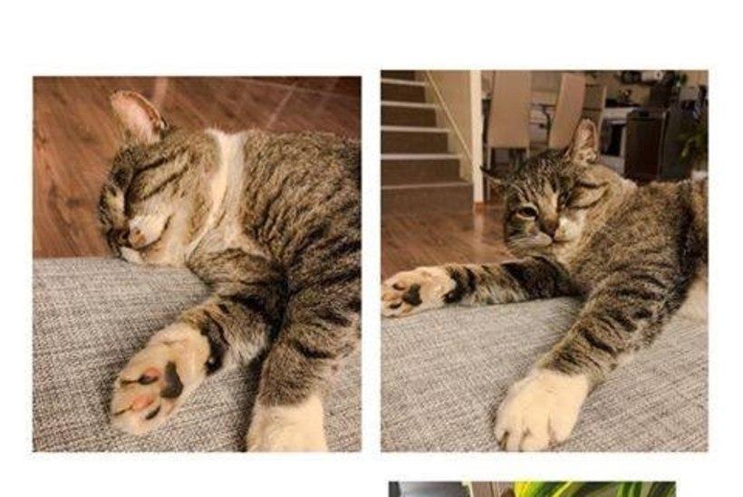 Perekond sai tagasi aasta kadunud kassi, kes oli rännanud kodust 75 kilomeetri kaugusele!