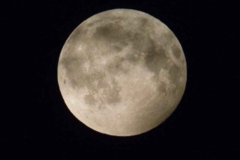 Tõnis Erilaiu lehesaba | Kuidas luupainaja nõudis õpetust Kuule ronimiseks