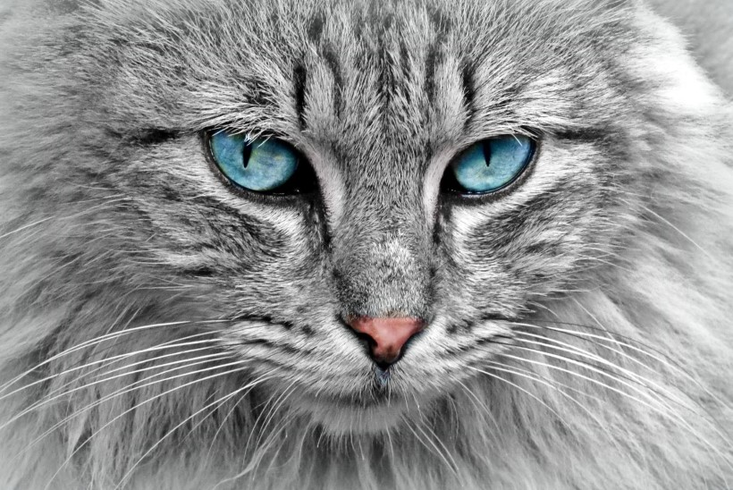 Uurimus: kassidel on näoilmed täiesti olemas, aga inimesed ei oska neid lugeda