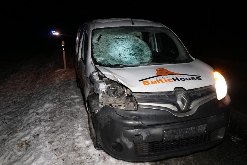 FOTOD | Türi lähedal hukkus kahes liiklusõnnetuses kaks põtra