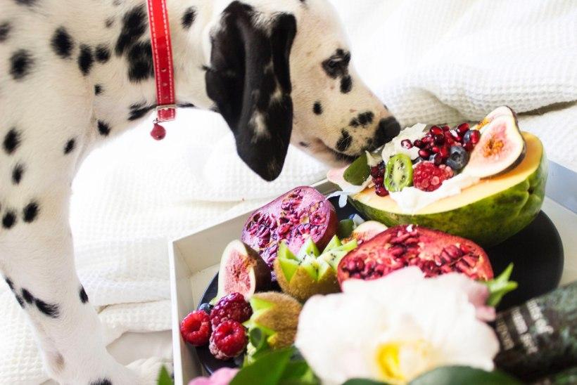 Jõuluõhtusöök koos lemmikloomaga: mida lubada, mida mitte?