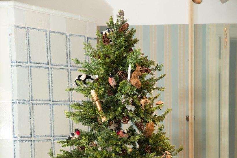 Millal toovad eestlased jõulupuu tuppa?