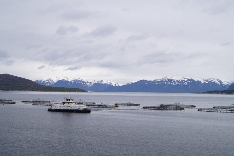 Kuidas mõjutab kliima soojenemine avamere kalakasvandusi?