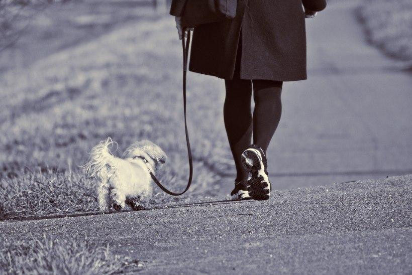 LOOMAARST PANEB SÜDAMELE: säästke loomi paanikast, loobuge ilutulestikust!