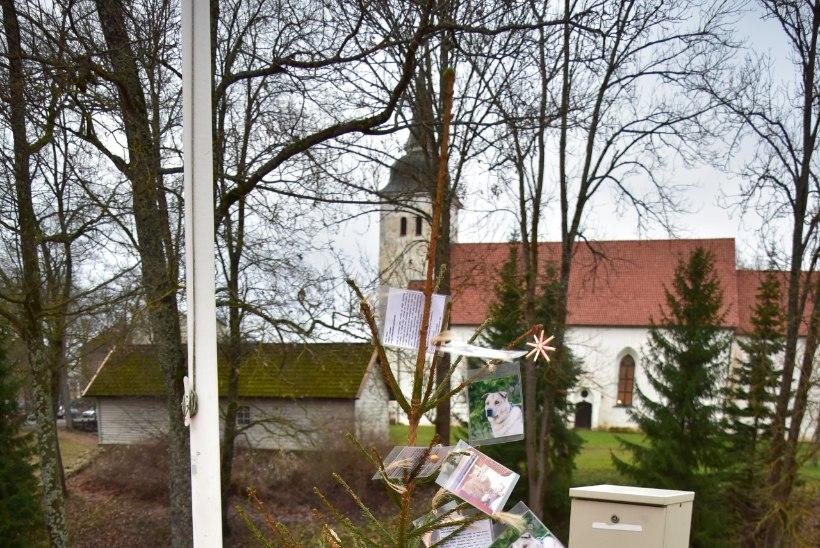 GALERII | Viljandi jõulukuuske ehivad kodu ootavate kasside-koerte pildid