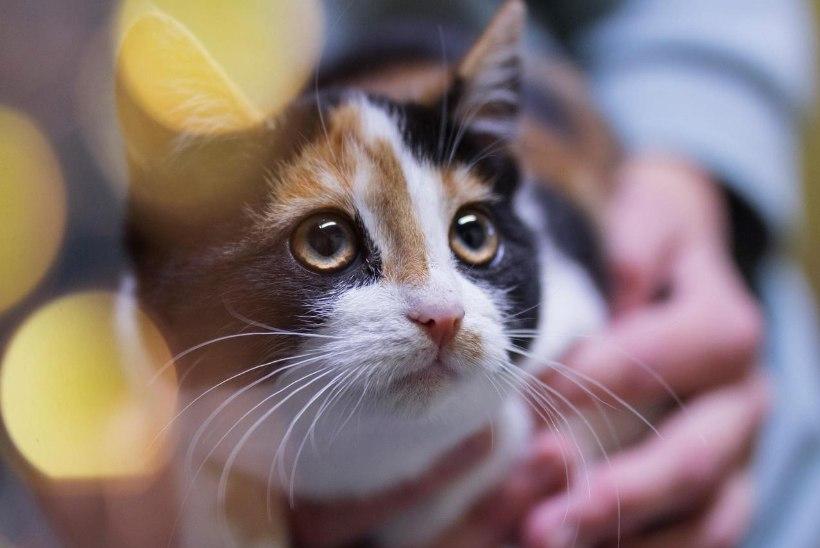 Jõulud varjupaigas ehk Kuidas me saame aidata hüljatud loomi?