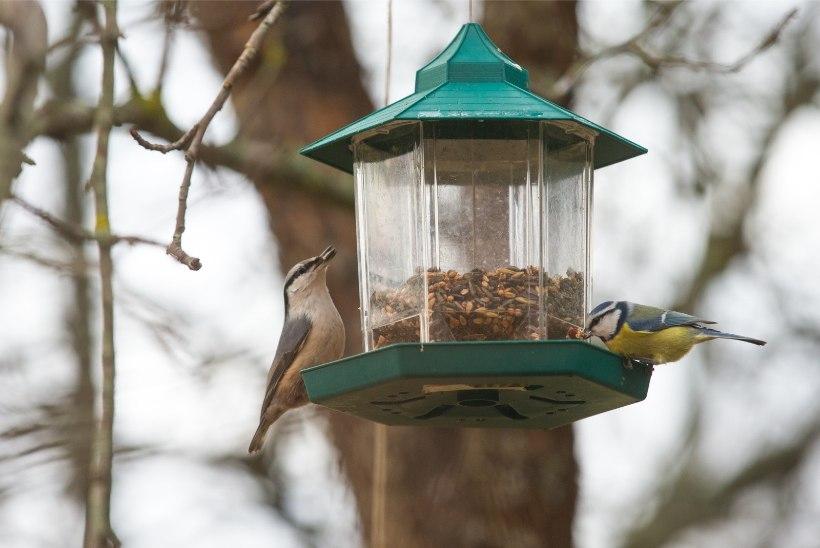 TOIMI TARGALT: milliseid vigu kipuvad inimesed linde toites tegema?
