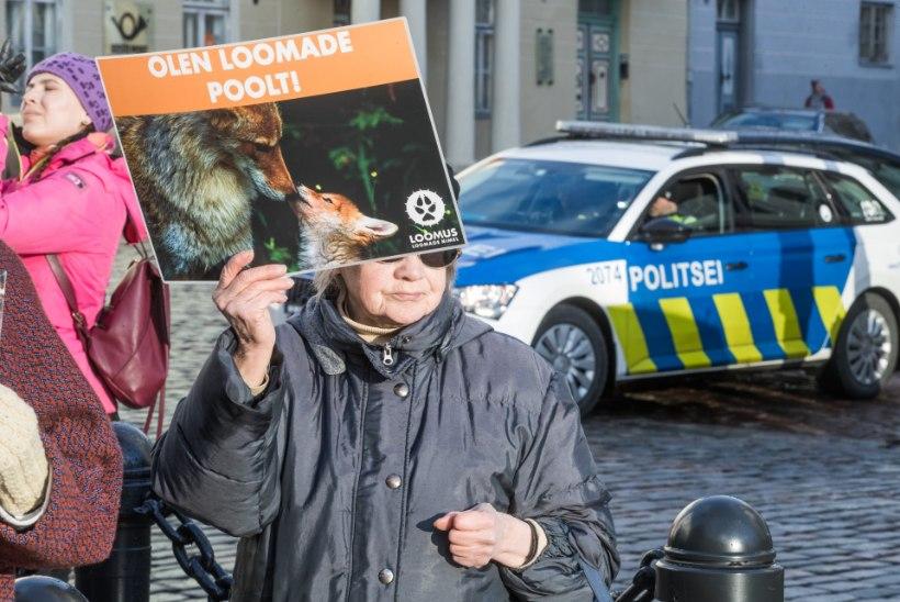 PILK PARTEIDELE | Loomakaitsjad: loomadega arvestavad enim rohelised. EKRE programmis ei paista midagi loomasõbralikku