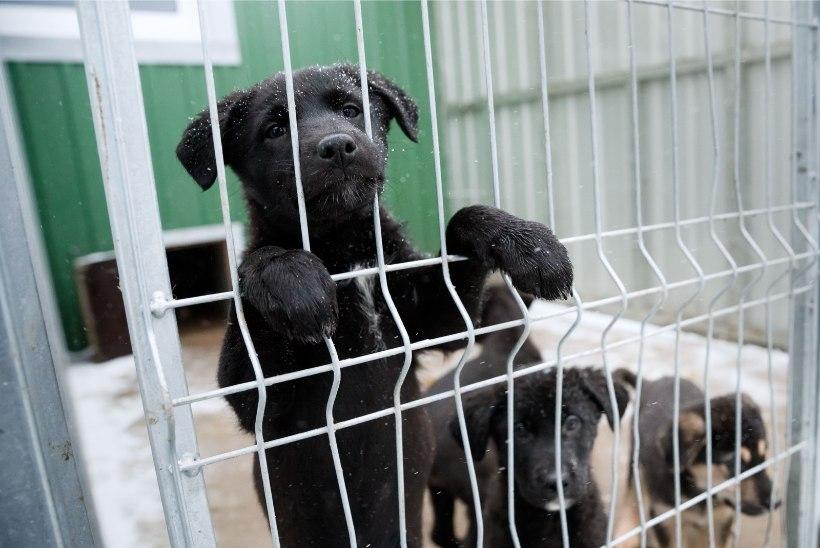 Vägivallaohvritest naised saavad tugikeskusesse minnes viia lemmiklooma varjupaika