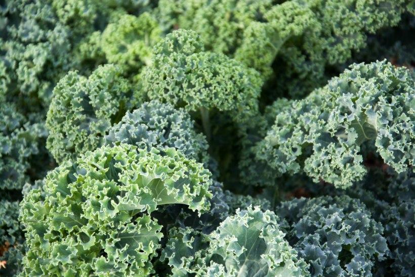 TUGEVDA IMMUUNSUST! Need 8 toiduainet aitavad haigustele paremini vastu panna!