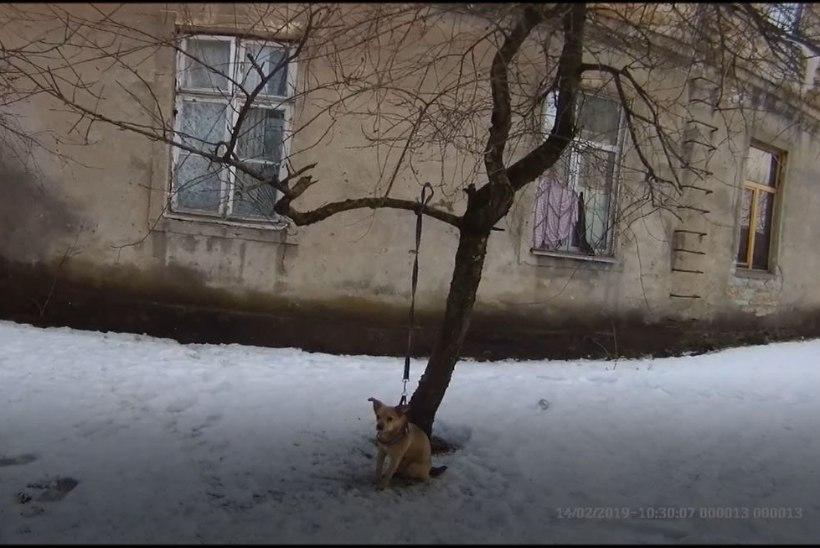 В Таллинне хозяин привязал пса к самой высокой ветке и исчез (ВИДЕО)