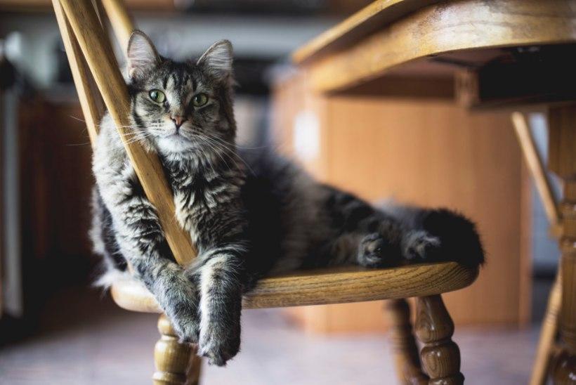 Kassid võivad olla valivad. Nii leiad õige kassiliiva!