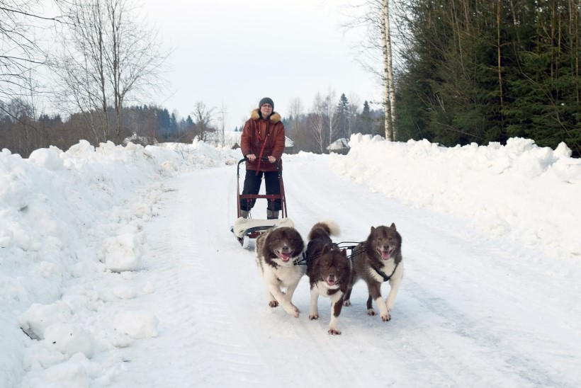 Elu koos 21 koeraga: tusatujust pole juttugi!