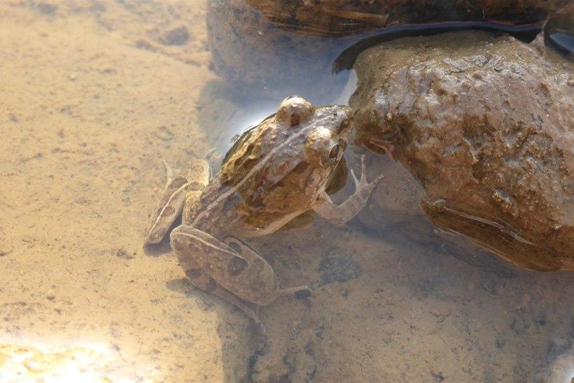 Vee-ettevõte maksis kalameestele jõe reostamise eest valuraha