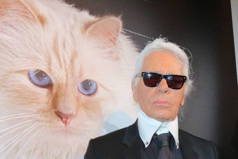 Põletavad küsimused: mis saab Karl Lagerfeldi kuulsast kassist ja kes pärib hiigelvaranduse?