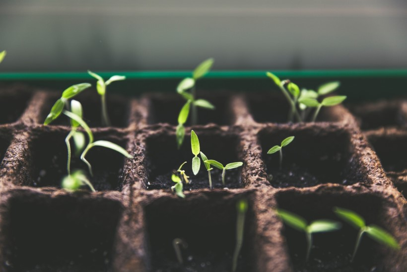 BLOGI | Kuidas teha ise idanemistest?