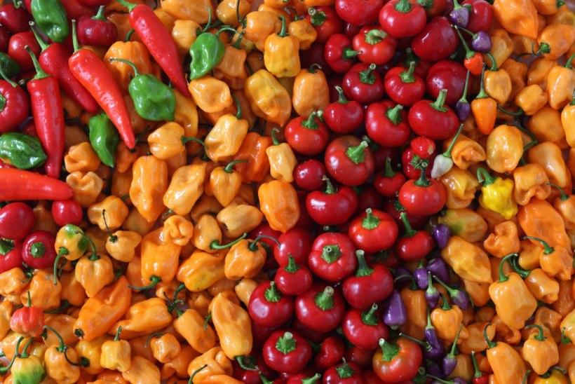 Põhjalik õpetus, kuidas seemnetest paprikaid või tomateid kasvatada