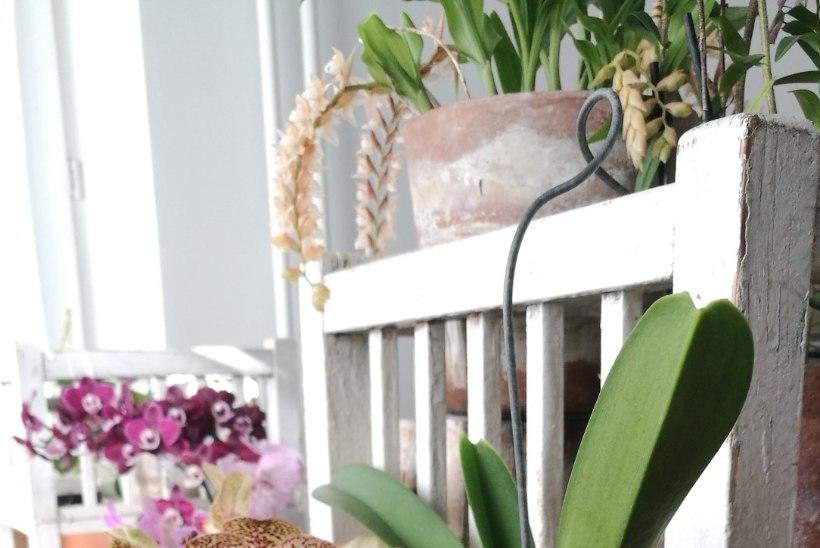 FOTOD | Taavi Teplenkov armus umbes 15 aastat tagasi orhideedesse: vaata, millised iludused näitleja kodu kaunistavad!