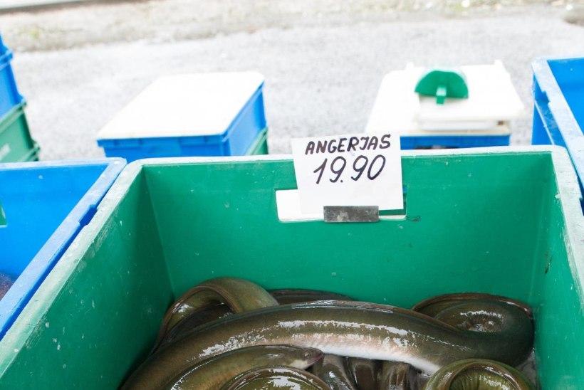 Võrtsjärve kuldkala angerjas saab oma festivali