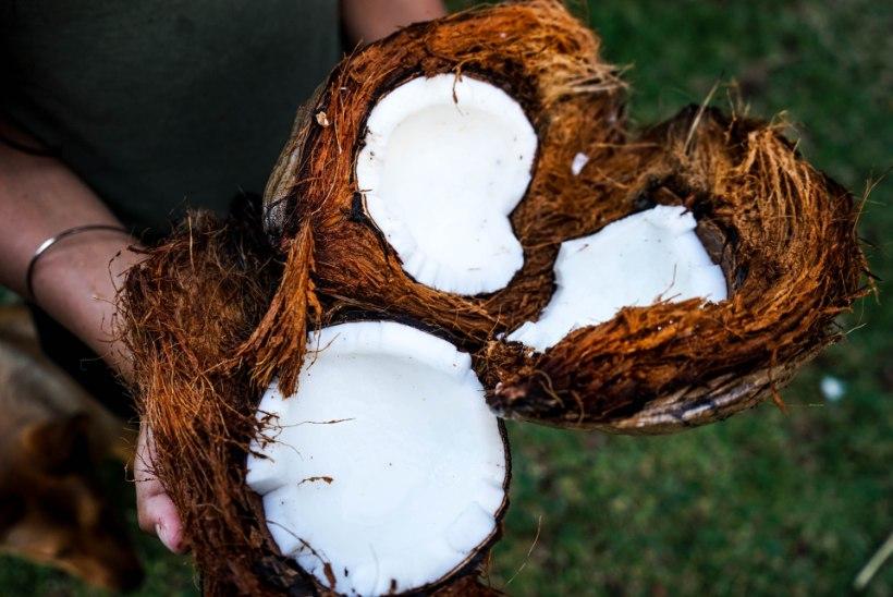 Hellita oma keha: valmista kookosõlist kehakoorija