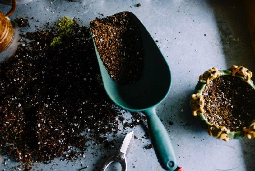 Pista seemned mulda: head nipid, et sinu ettekasvatamine õnnestuks