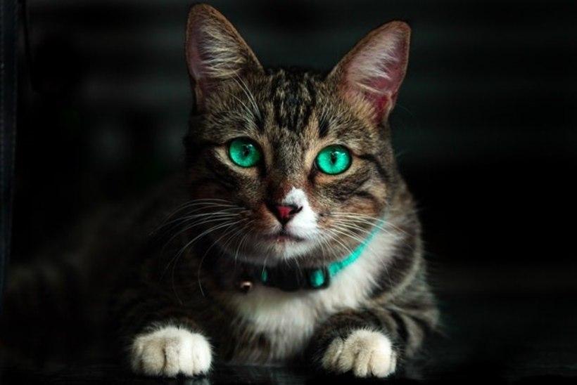 Lugeja küsib: mida teha, kui kass tekitab allergiat?