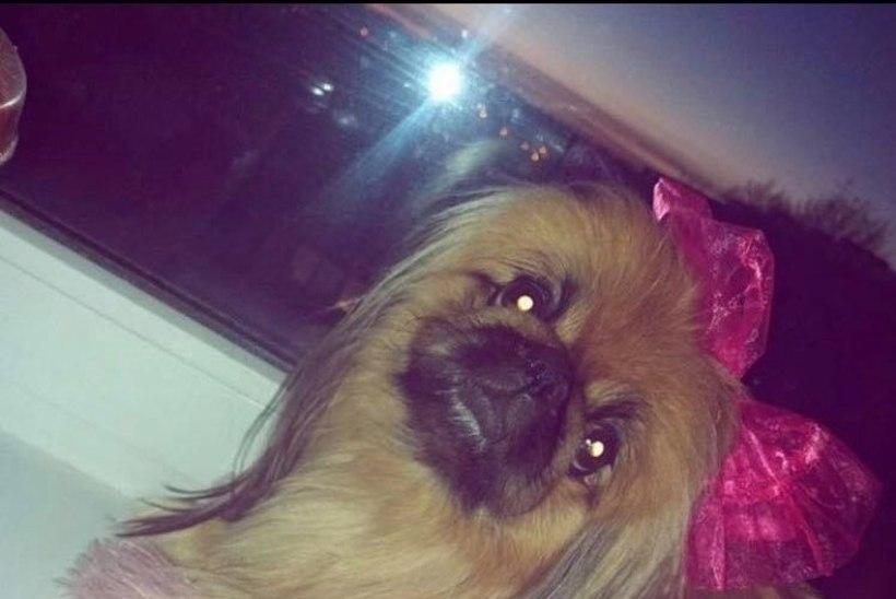 KOHUTAV: korteripeol visati pärast vägivaldset tüli pisike koer viienda korruse aknast välja