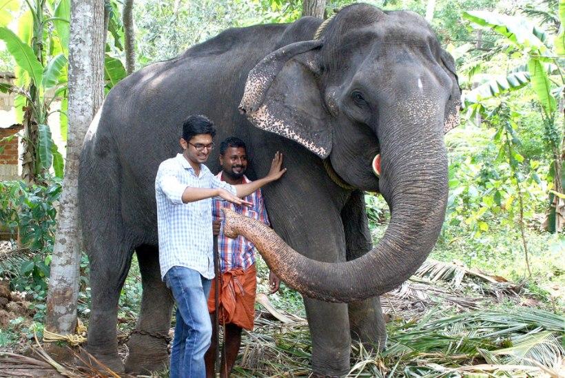 REKORDIOMANIK: Aasia vanim elevant elas vangistuses 88aastaseks