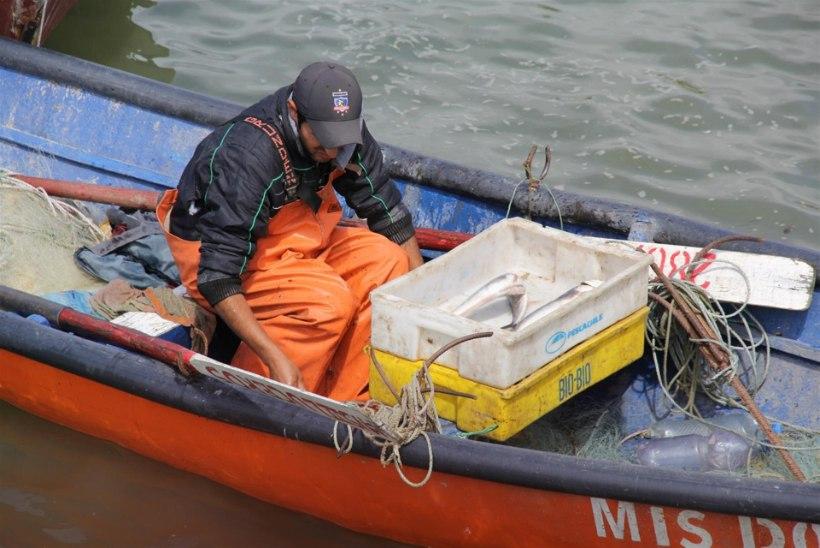 Korralik raiskamine: kolmandik püütud kalast ei jõua inimeste kõhtu