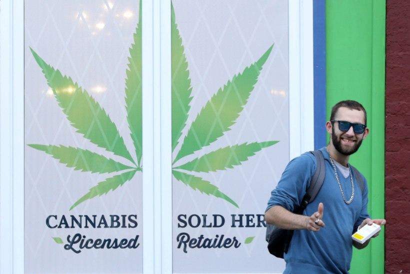 Число потребителей марихуаны в Канаде после легализации почти не изменилось