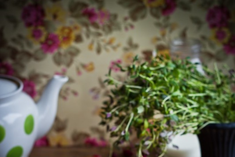 Toidufotograafiast supifännide maiuspalani ehk Selle nädala toidu-uudised