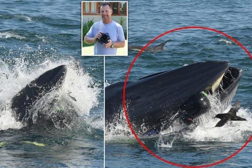 USKUMATU SEIKLUS: vaala lõugade vahele sattunud mees pääses eluga