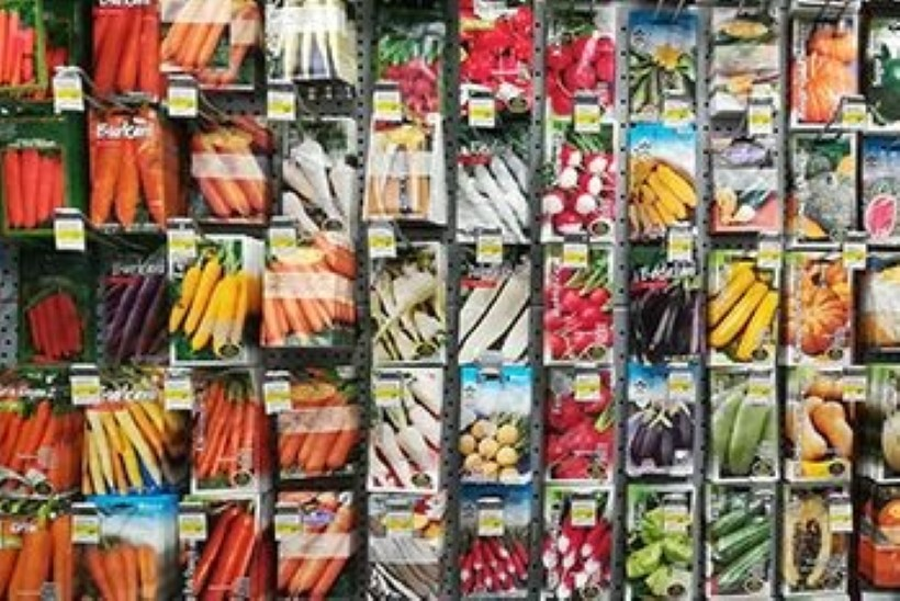 Bauhofi Aiaparadiisil on terve hulk seemneuudiseid!