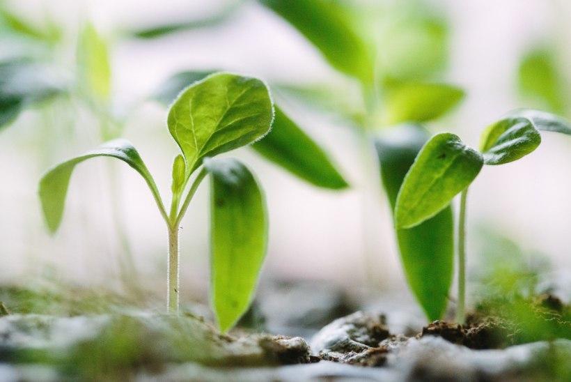 Saagu valgus! Taimelamp aitab toataimedel ja istikutel kasvada