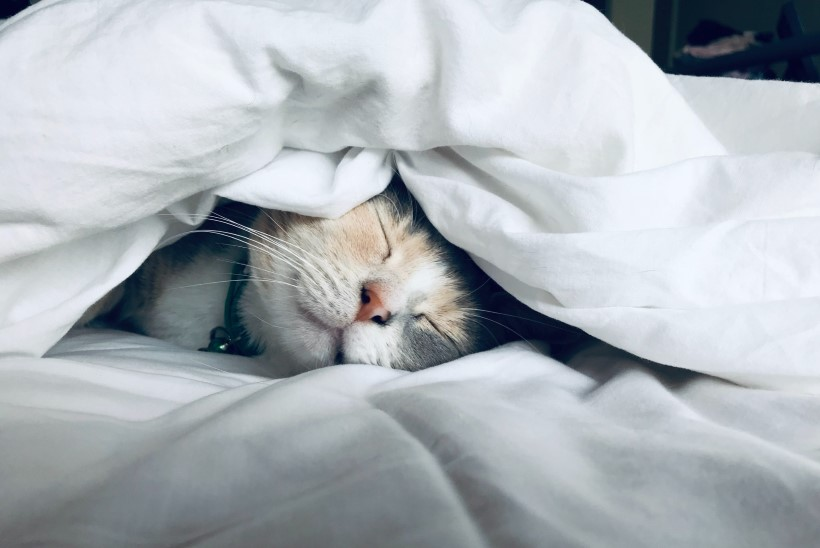 Appi, kas mu kiisu magab liiga palju?