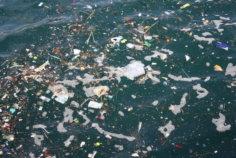 Surnud vaala kõhust leiti 40 kilo plasti