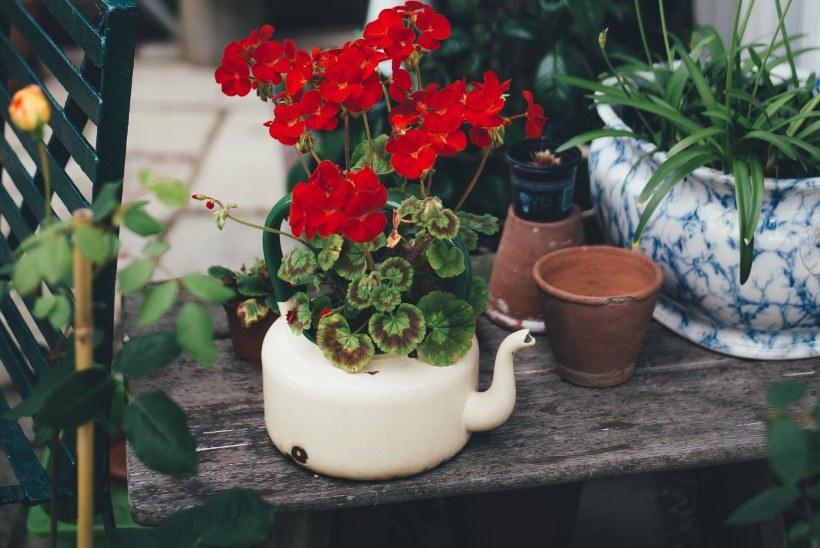 Tee oma rõdust imeline miniaed! Istuta konteineritesse köögivilju, maitsetaimi ja lilli