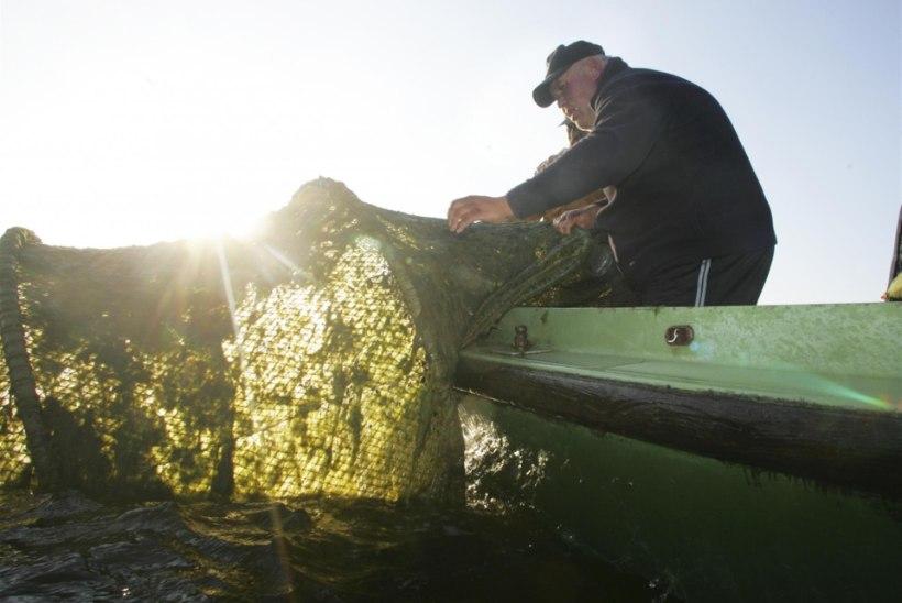 Saaremaa kurdab kehva kalandustoetuse üle