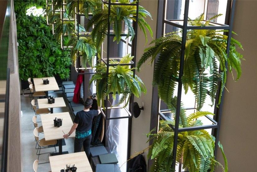 GALERII | Uus koht: Tartus Rüütli tänaval alustab elusate taimedega kaunistatud klubi