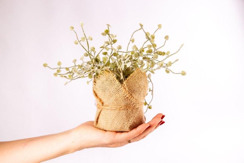 VÄÄRT NIPID | Toataimed nõuavad kevadist suurpuhastust