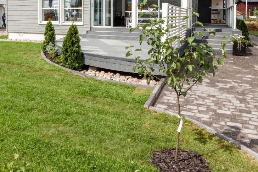 Viljapuude valimise spikker: nii leiad oma koduaeda just selle õige ploomi- või õunapuu